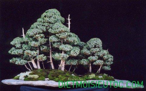 bonsai-dang-rung_1.jpg
