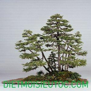 bonsai-dang-rung_17.jpg