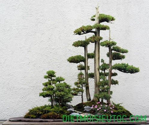 bonsai-dang-rung_18.jpg