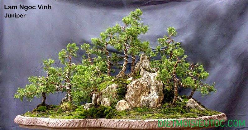 bonsai-dang-rung_19.jpg