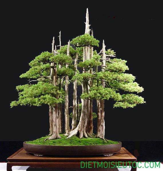 bonsai-dang-rung_2.jpg