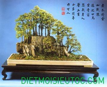 bonsai-dang-rung_20.jpg