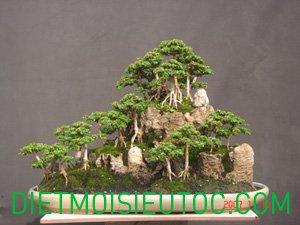 bonsai-dang-rung_21.jpg