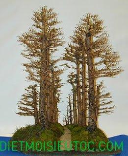 bonsai-dang-rung_3.jpg