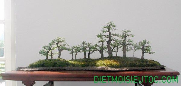 bonsai-dang-rung_9.jpg