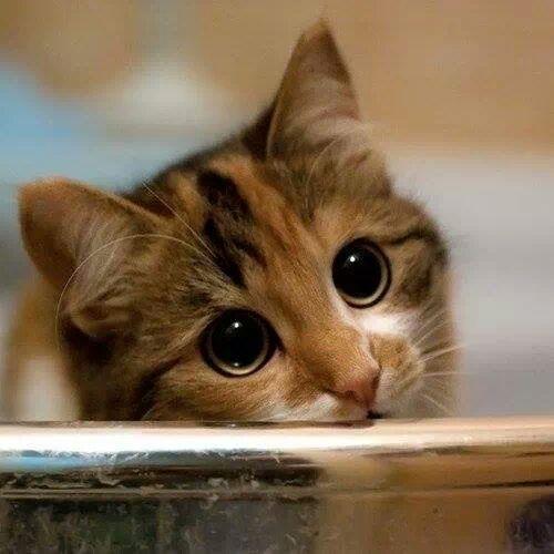Tổng hợp những chú mèo đáng yêu nhất