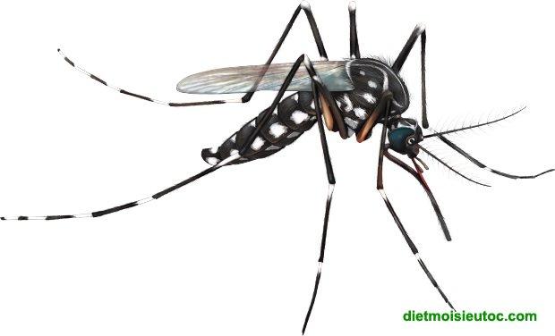 Dịch vụ diệt côn trùng, diệt muỗi