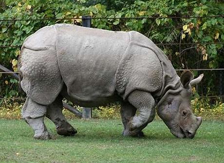 10 loài động vật quý hiếm nhất thế giới sắp bị tuyệt chủng