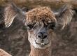 15 ảnh hài hước của động vật mới nhất 2017