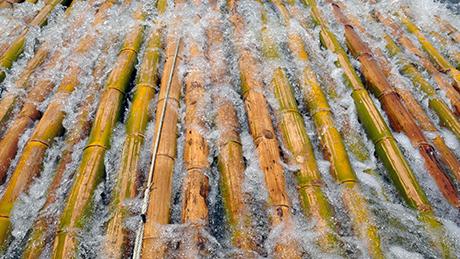 2 Cách diệt mọt gỗ tre nứa không dùng hóa chất