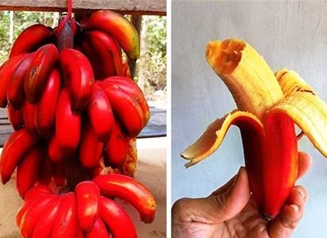 20 loại trái cây hiếm có khó tìm nhất trên thế giới