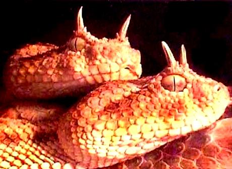 5 loài rắn có nọc độc nhất thế giới