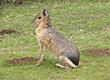 Ảnh:  9 loài động vật đẹp và lạ nhất thế giới