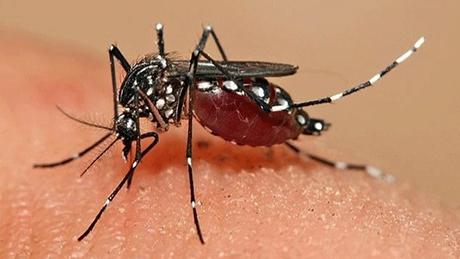 Bảng giá thuốc diệt côn trùng mới nhất