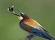Bộ sưu tập ảnh đẹp về các loài chim