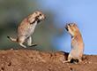Bộ sưu tập ảnh đẹp về cuộc chiến của loài động vật