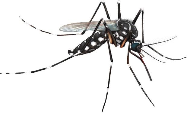 Ảnh:  Dịch vụ diệt côn trùng