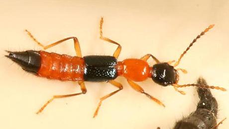 Dịch vụ diệt kiến ba khoan hiệu quả cao