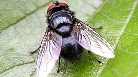 Dịch vụ diệt ruồi và phun thuốc diệt ruồi hiệu quả