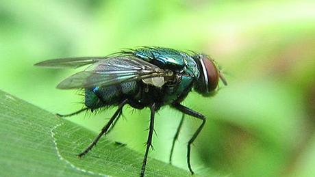 Diệt côn trùng tại Quận 10