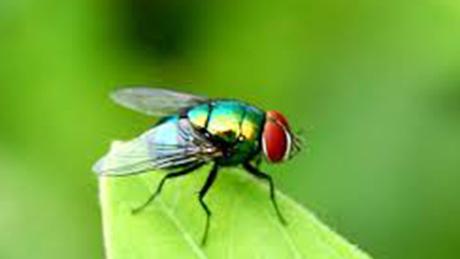 Diệt côn trùng tại Quận 11