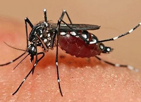 Diệt côn trùng tại Quận 2