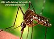 Diệt côn trùng tại Quận 3