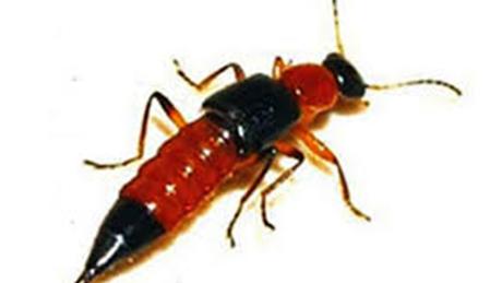Diệt côn trùng tại Quận 5