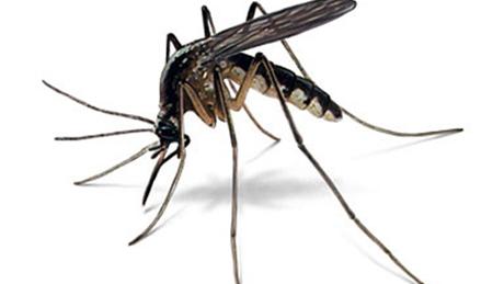 Diệt côn trùng tại Quận 6