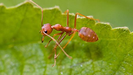 Diệt kiến tận gốc và phun thuốc diệt kiến