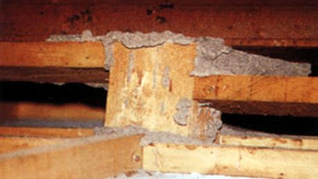 Diệt mối tận gốc cho gác gỗ