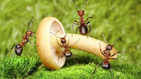 Làm thế nào để diệt hết kiến và không quay lại ?
