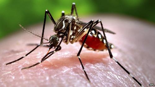 Mối nguy hại của loài muỗi - hiểm họa của loài muỗi
