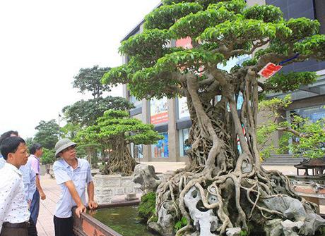 Top 10 cây bonsai đắt nhất Việt Nam