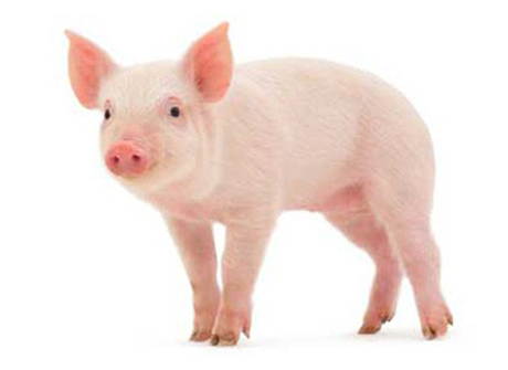 Top 10 loài động vật thông minh nhất thế giới