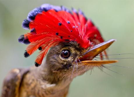 Top 35 loài động vật quý hiếm mà bạn khó có thể thấy ngoài đời