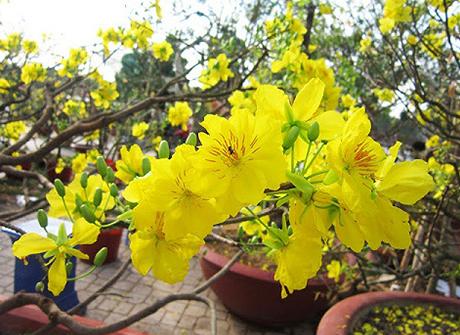 Ý nghĩa của các loại hoa thường được trưng trong ngày tết Việt Nam